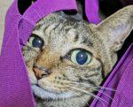 「猫界のBTS」イケメンすぎる猫の笑顔がTwitterで話題!
